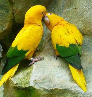 אהבה אמיתית בין ציפורים